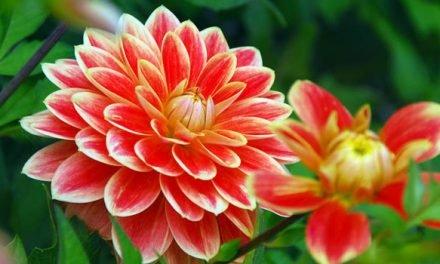 NextNews.bg с предизвикателство: Да поздравим любимото Цвете със снимка на неговото цвете!