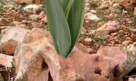 Пролетта или красотата камъни пробиват?! И двете!