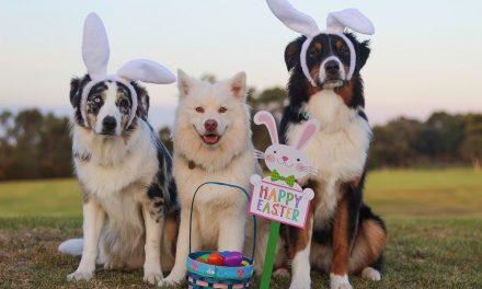 Така празнуват Великден зодиите. Разпознахте ли се?